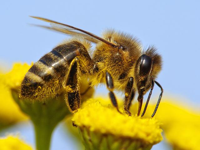 Bienenfabrik